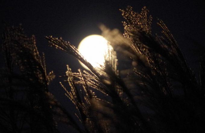 [今月のRemind 10月編] 十五夜だけじゃない?十三夜にもう一つのお月見を楽しもう!