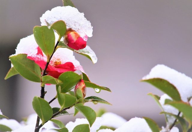 立春(りっしゅん)