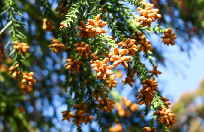 [今月のRemind 2月編] 辛い症状は最小限に。暮らしに取り入れたい花粉症対策