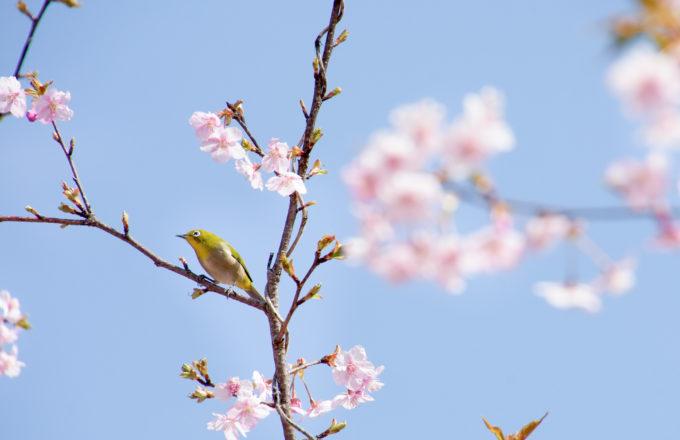 [今月のRemind 3月編] 春の訪れを祝う春分の日。どんな意味や慣しがあるの?