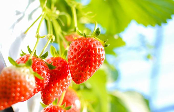 [今月のRemind 4月編] 春土用には何を食べる?土用にまつわるアレコレ