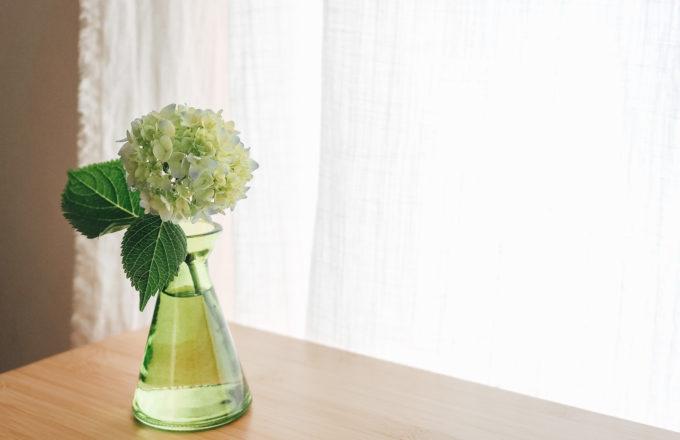 [今月のRemind 6月編] 厄除けのおまじないにも。季節の花、アジサイを楽しもう