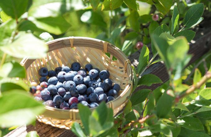 [今月のRemind 8月編] 旬の味をとじこめて。夏の果物でジャム作り