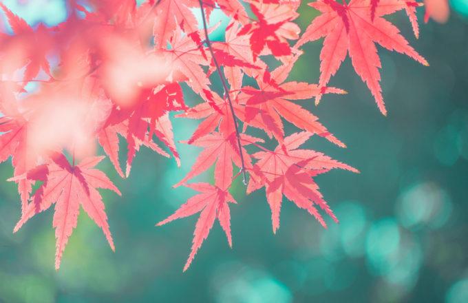 [今月のRemind 9月編] 秋バテを感じたら早めに対策を。自律神経のバランスに注目!
